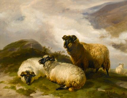 Thomas Sidney Cooper Mountain Sheep